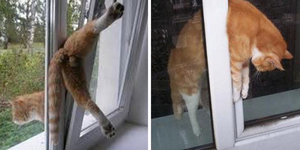 Cat can get stuck in window, keep her safe