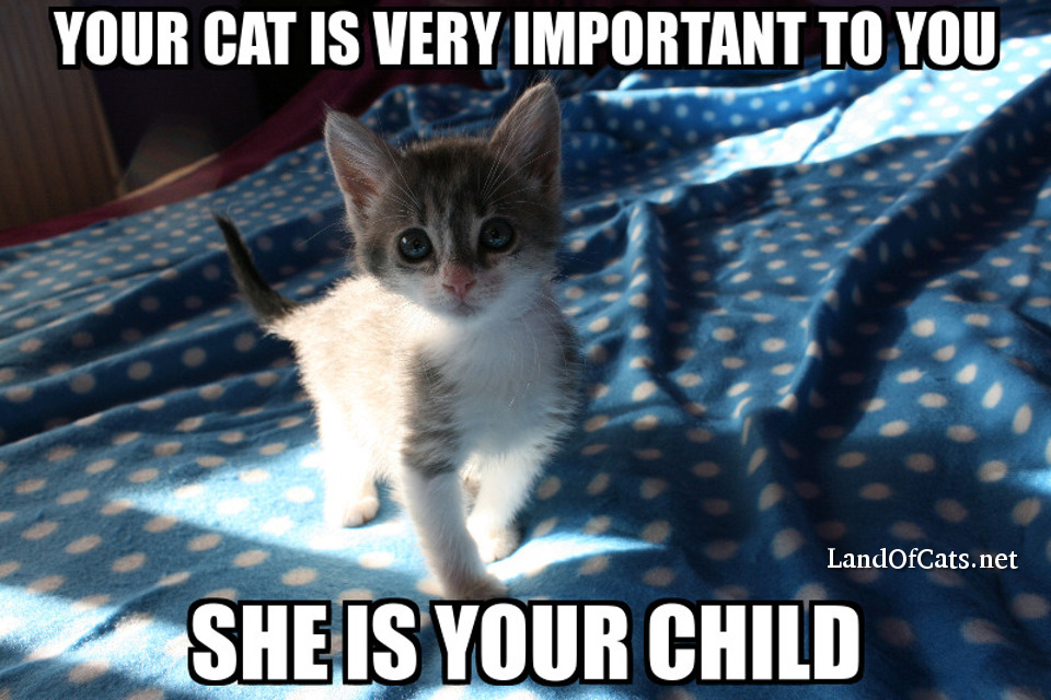 your cat is important