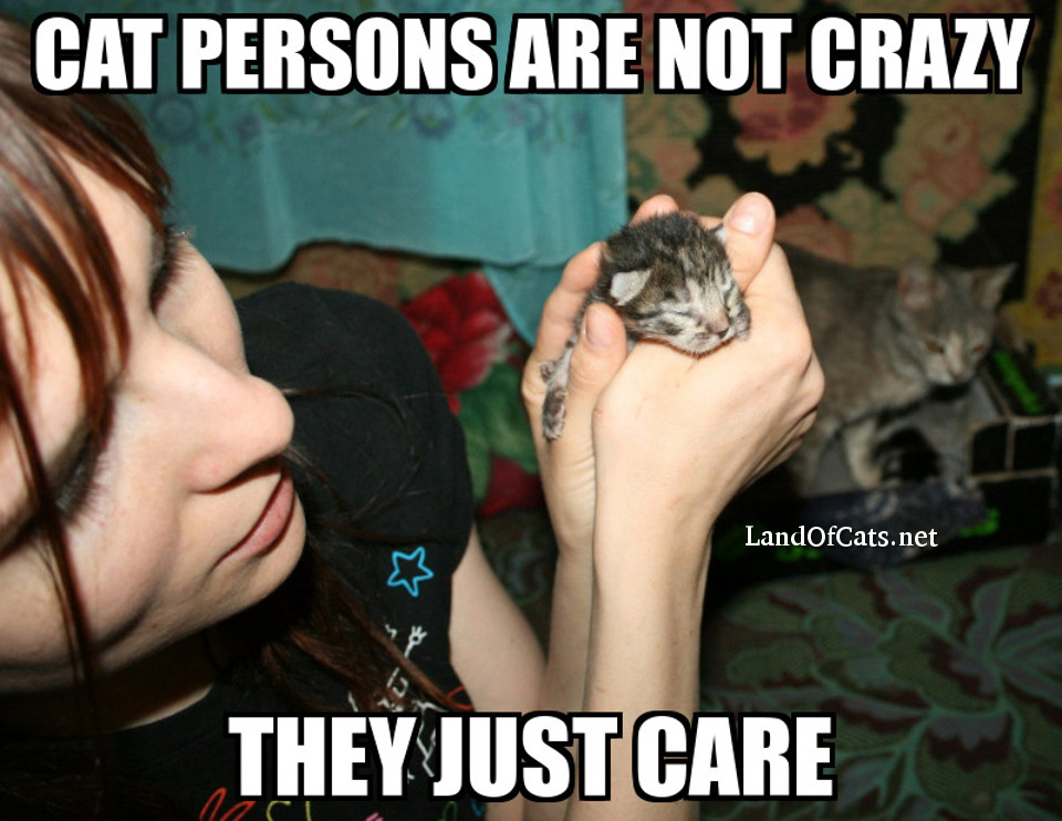 cat persons care