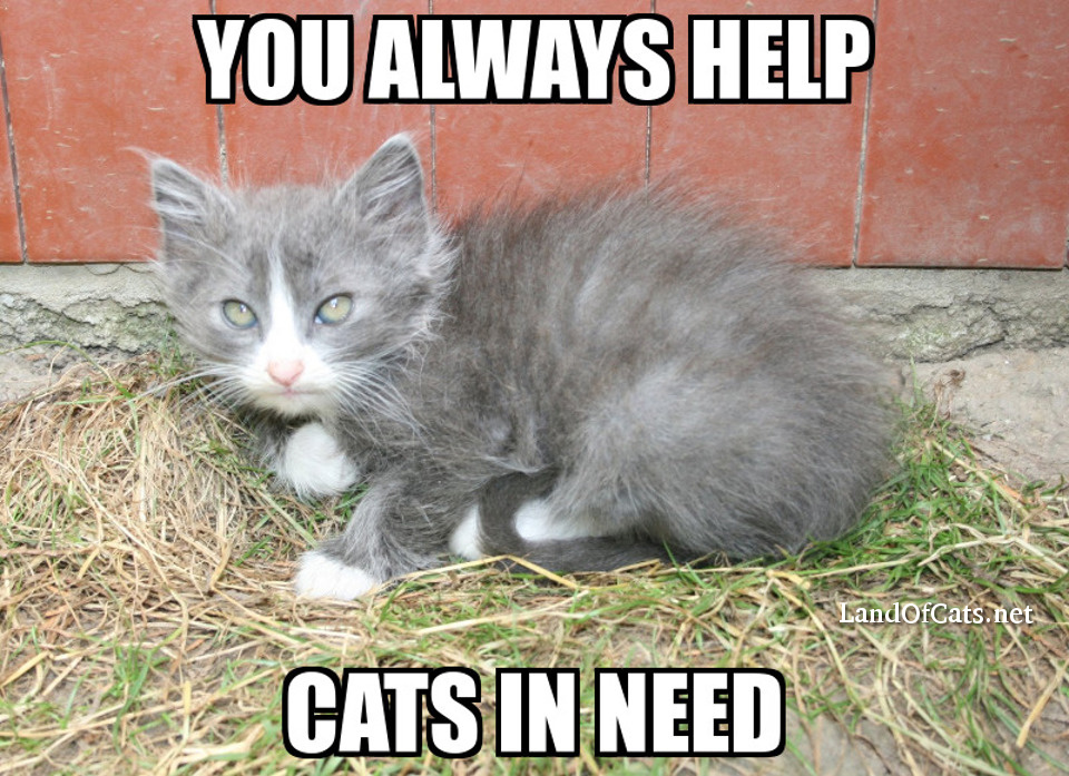 you help cats in need