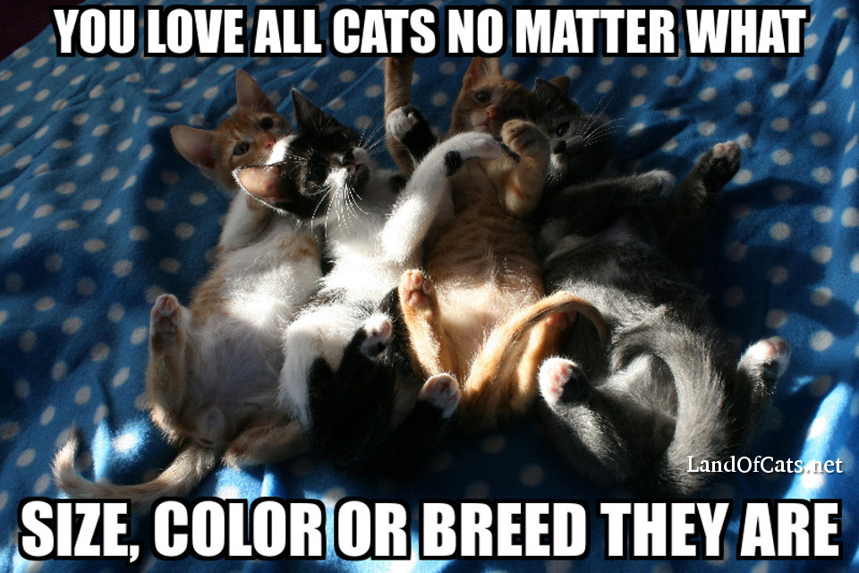 you love all cats