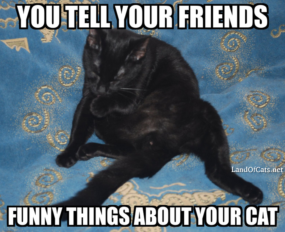 funny things about your cat