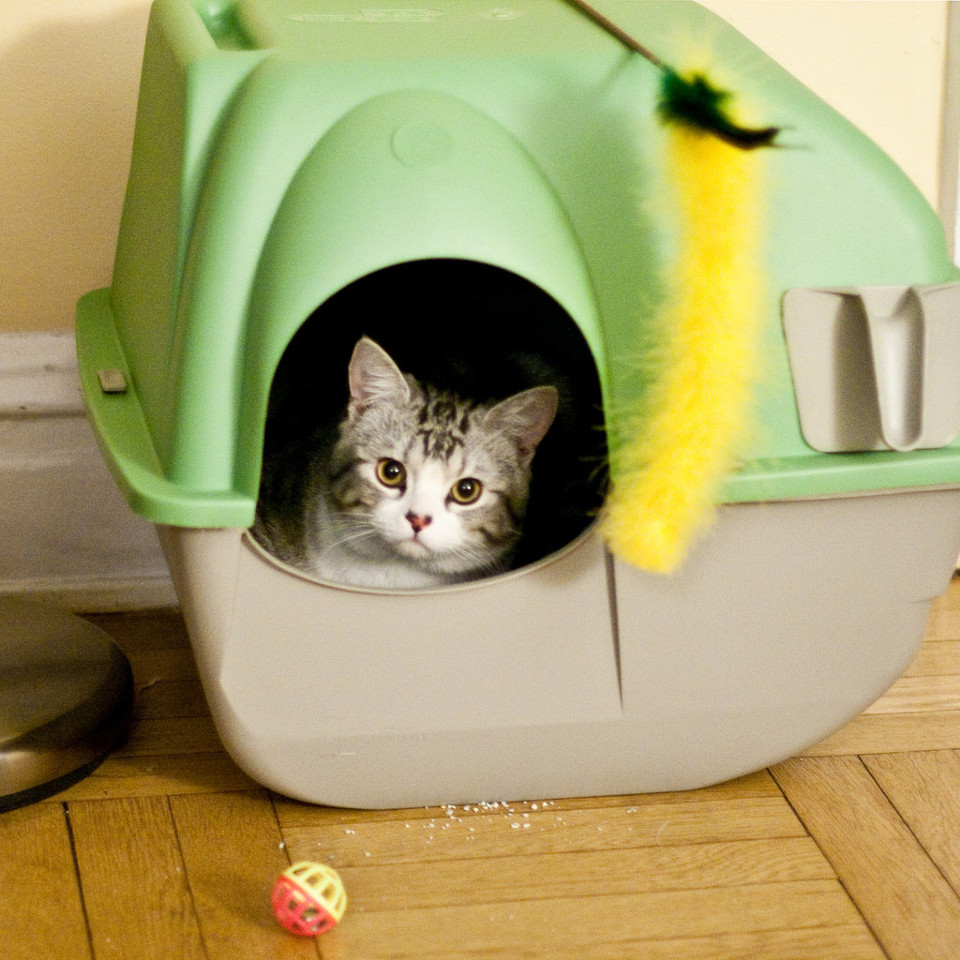 What If The Cat Refuses To Use The Litter Box?