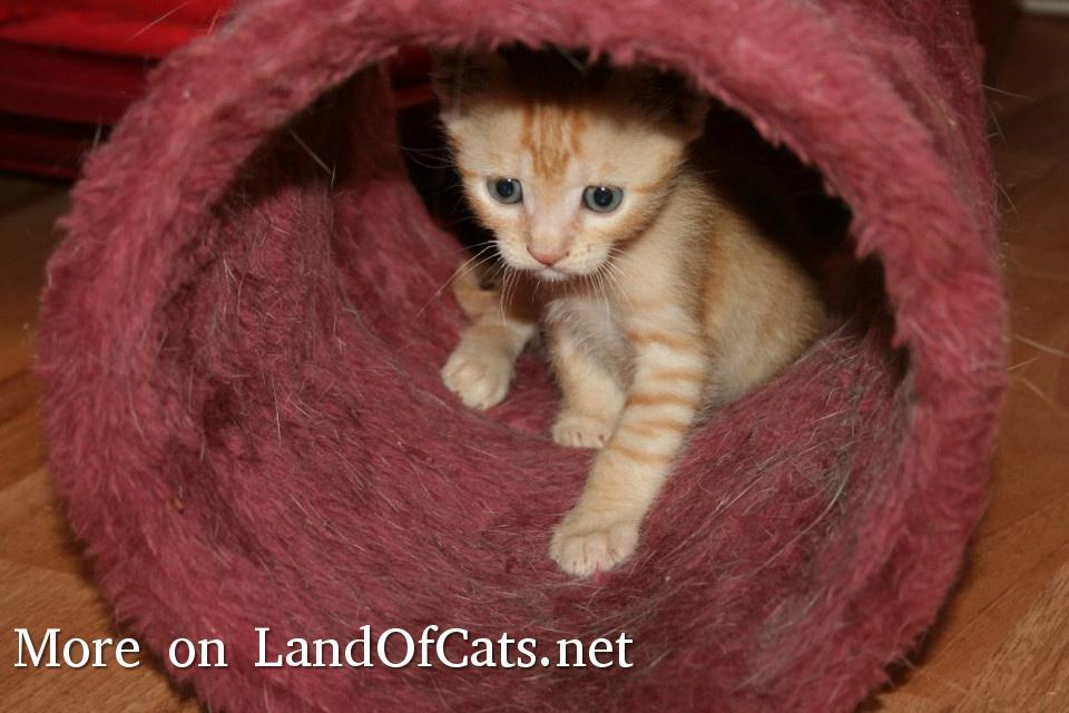 Cute Orange Kitten!
