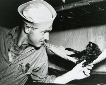 The Bond Between Cats And Sailors!