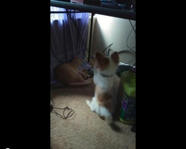 Cat Steals Dog's Toy And He Begs To Get It Back!