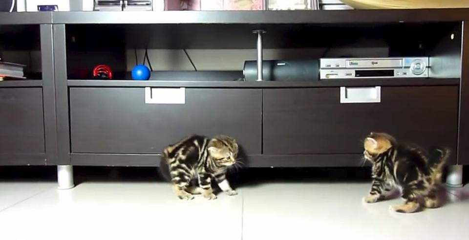 Viewing Cat Videos Boosts Energy And Positive Emotions