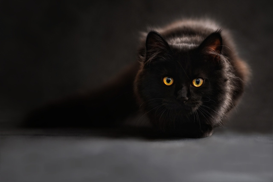 Black Cat Appreciation Day On August 17th!