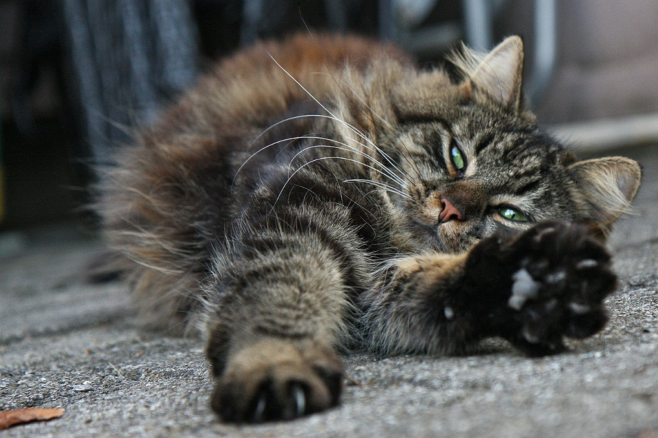 Do You Know Your Cat's Body Language?