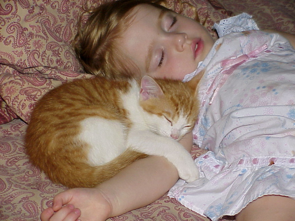 Cats And Babies Can Share A Wonderful Relationship!