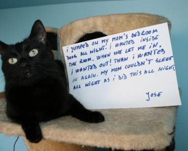 Funny Cat Confession!