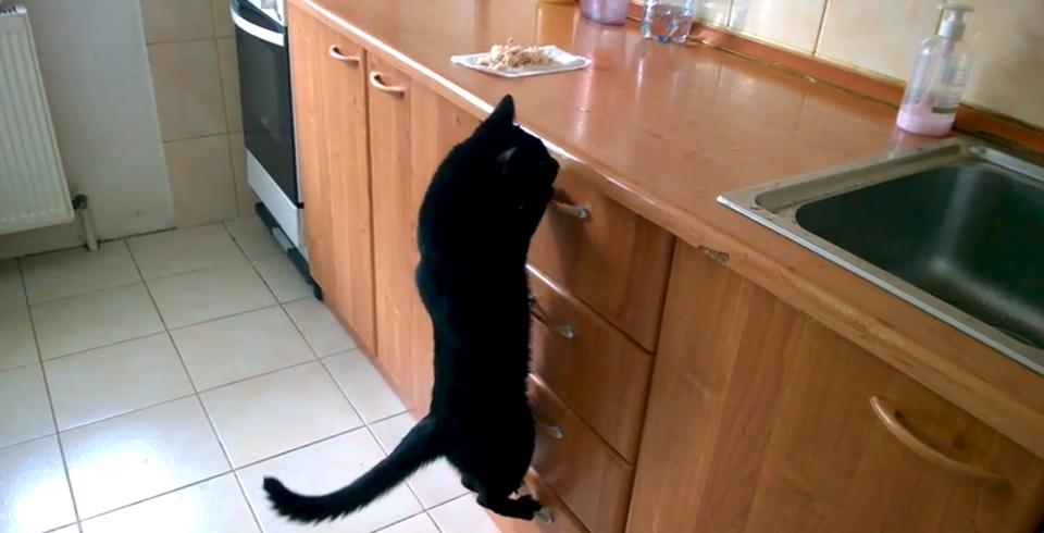 Funny Cat Stealing Food!