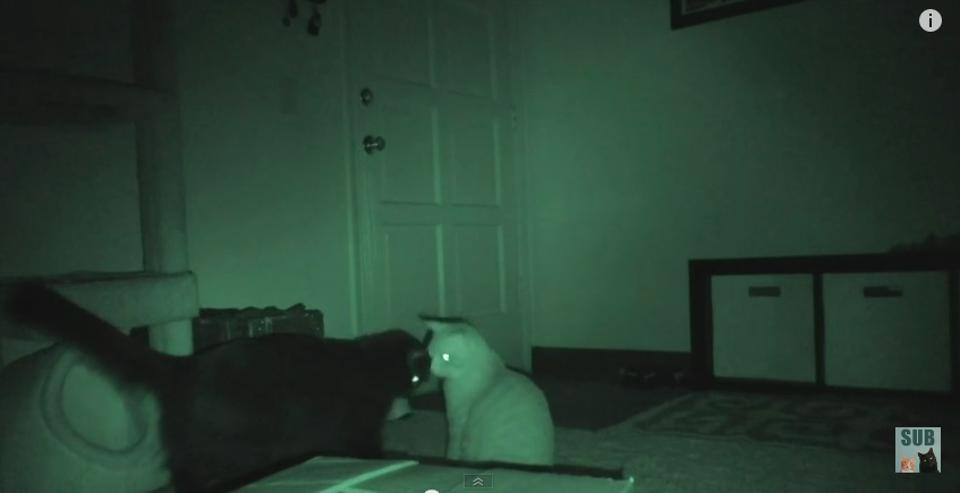 What do cats do at night while you sleep 37