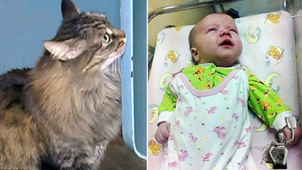 Cat Stayed Next To An Abandoned Child For Hours To Keep Him Alive