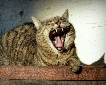 Are Cats Laughing At Us Behind Our Backs?