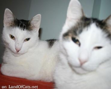 Are Cats Plotting World Domination?