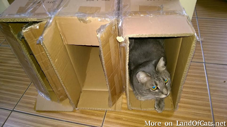 Boxes Are The Best!
