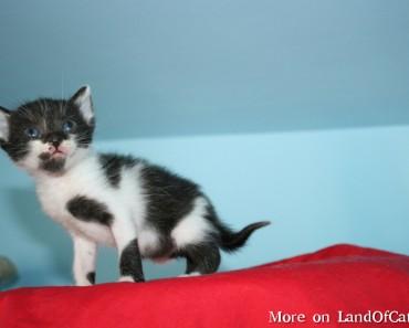 Black And White Cats – Tuxedo Cats!