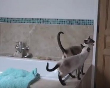 She Just Wanted A Relaxing Shower. What The Cats Do Is The Funniest Thing You'll See Today