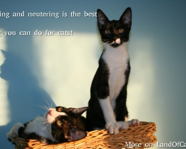 The Truth About Spaying or Neutering Your Cat!