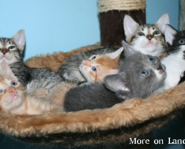 Are You Curious How Cuteness Overloaded Looks Like? Just Look At These 7 Cute Kittens!