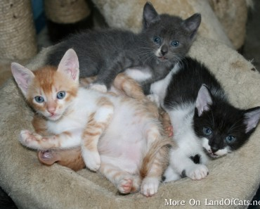 Facts About Kittens!