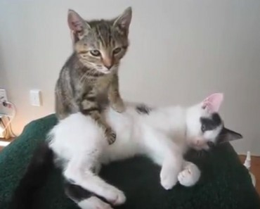 This Kitten Will Show You The Art Of Massage!