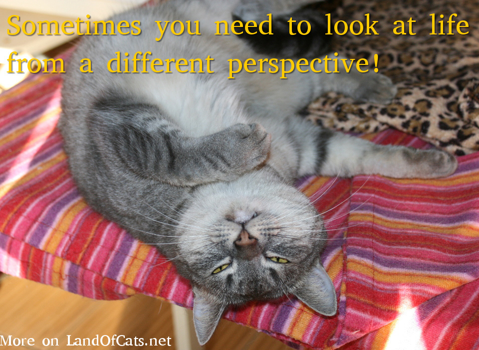 Cat Perspective!
