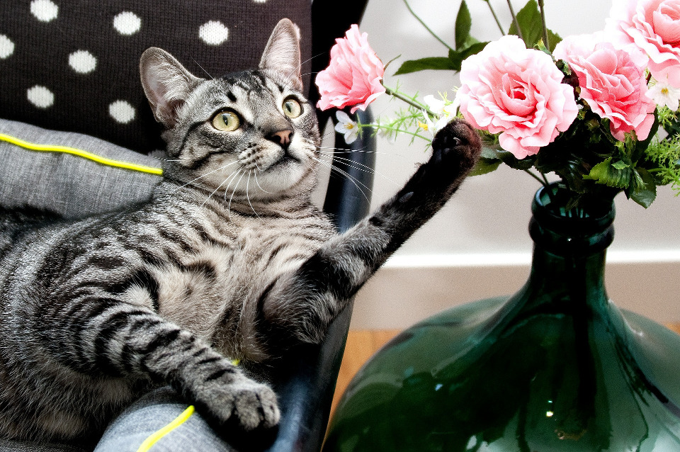 Plants Toxic To Cats!