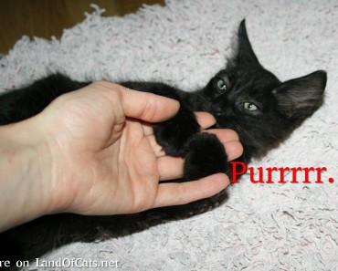 I Am Purring! I Might Be Happy, I Might Be Not!