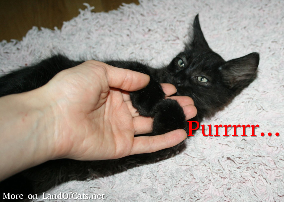 I Am Purring! I Might Be Happy, I Might Be Not!