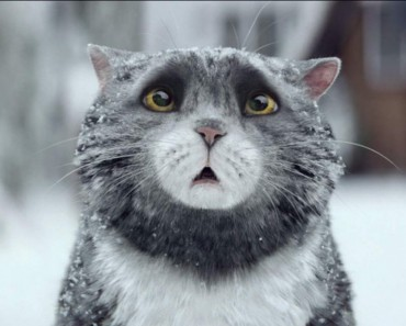 Mog The Cat Creates Christmas Chaos! Can She Save The Day?