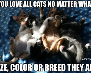 How Do You Know If You Are A Cat Person?