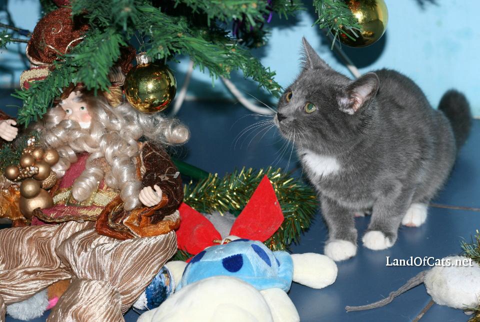 How Do Cats Spend Christmas?