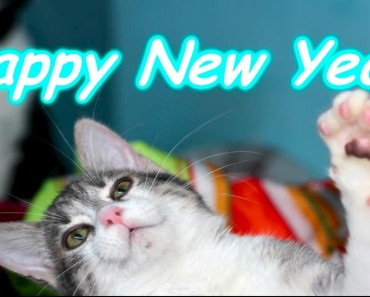 Keep Your Cats Safe During New Year's Eve!