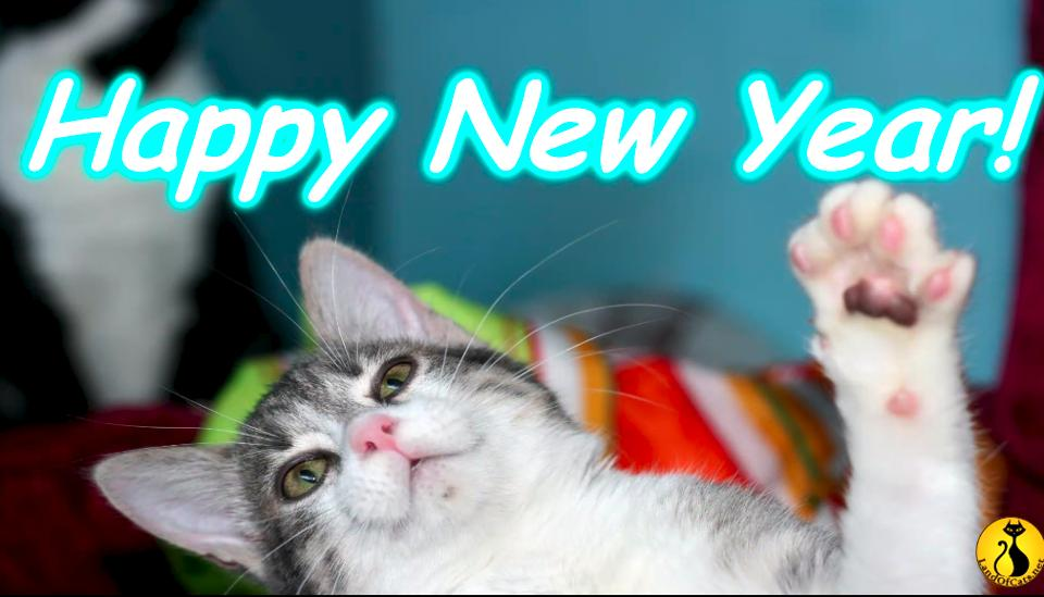 keep your cats safe during new years eve