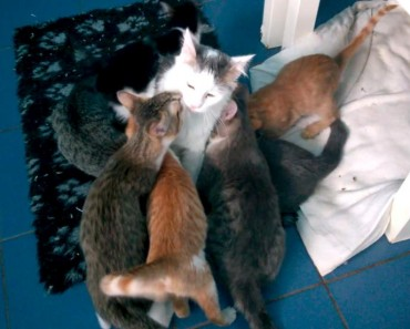 Loving Moments Between Cat Mother And Her Kittens!