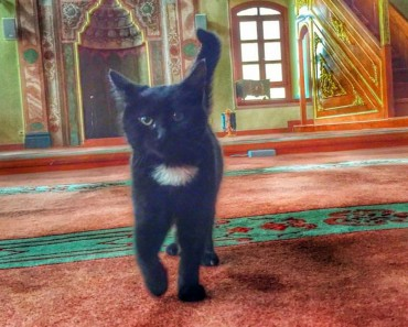 Mosque's Doors Open For Stray Cats During Winter