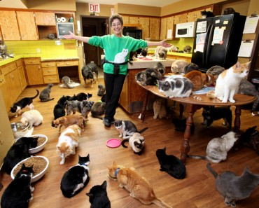 The Amazing Lady With 1000 Cats