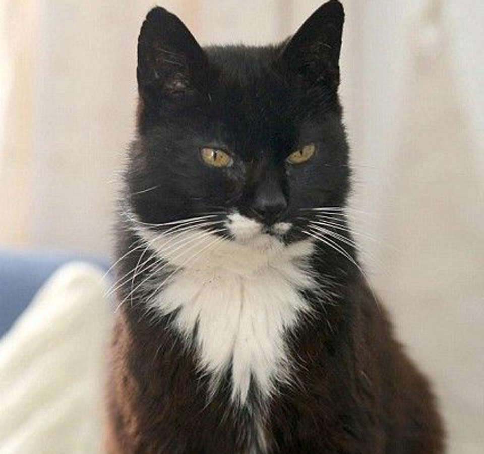 The Oldest Cat Ever