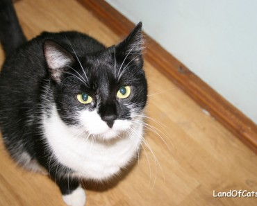Tips for Adopters of Three-Legged Cats!