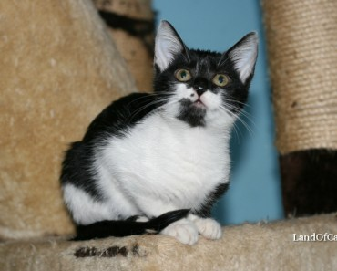 The Mystery Behind 'Tuxedo's Cats Patchy Fur!