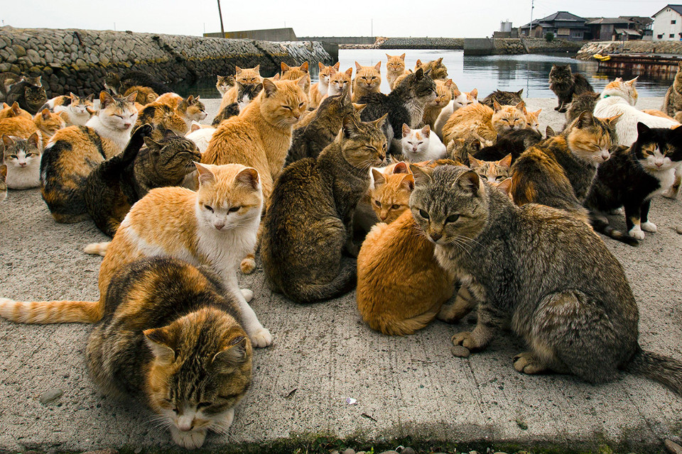 Aoshima, a Japanese Cat Island