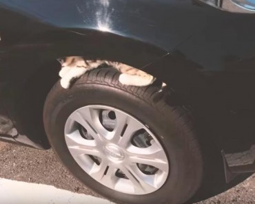 Check For Cats Under The Hood