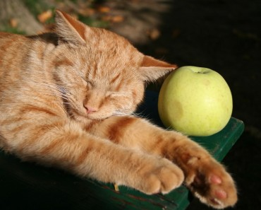 Safe Fruits For Your Cat!