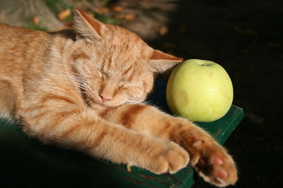 Should Cats Eat Fruit