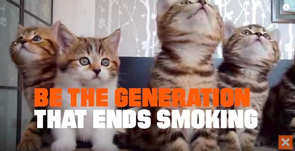 To Prevent #CATmaggedon, Quit Smoking!
