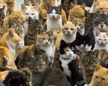 The Japanese 'Cat Island' Benefits From Food Aid!