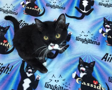 """Cassidy Will Be The First Cat In The World To Receive """"Bionic Legs""""!"""
