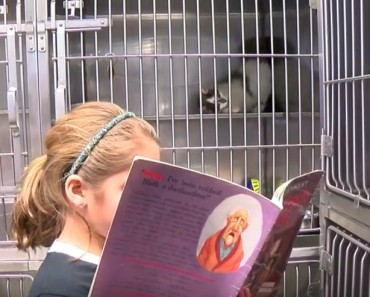 Cats And Dogs Help Kids Practice Reading In Johnson County